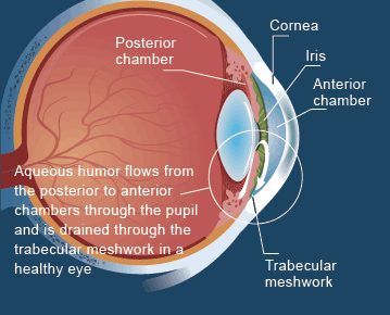 Healthy Eye Illustration